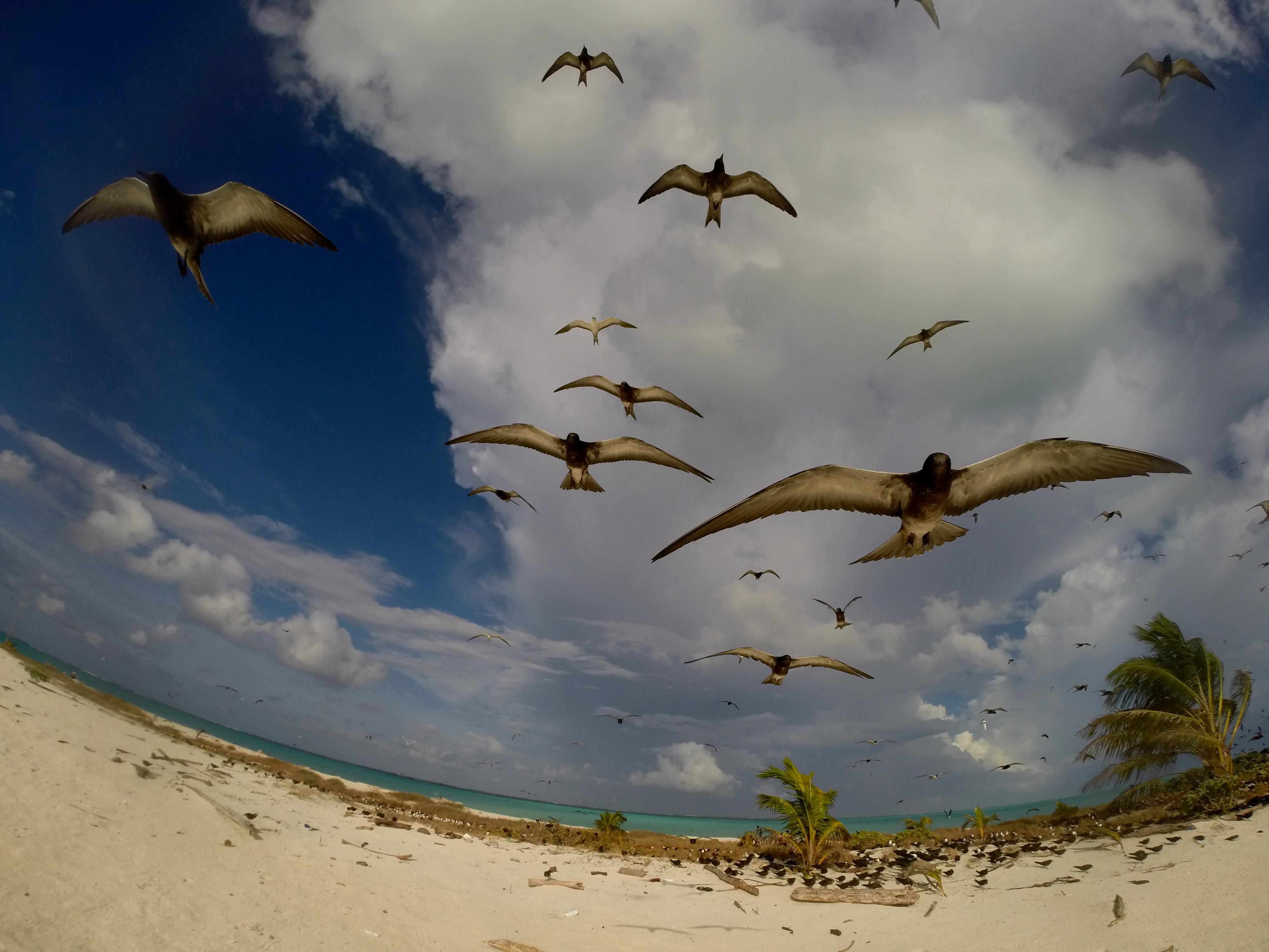 הרצאות מסע - אי הציפורים