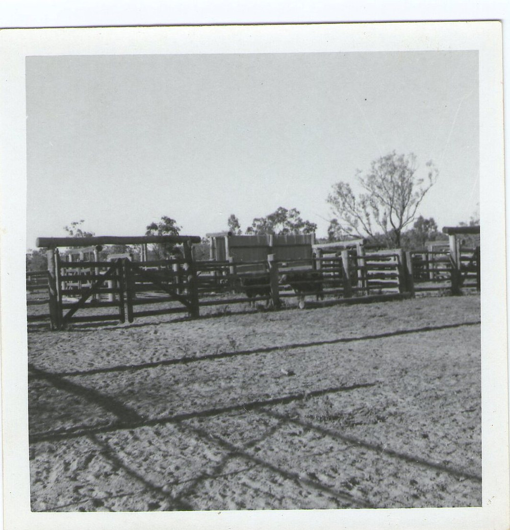 Cattle yards at Lornesleigh Station