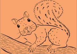 Juniper The Squirrel