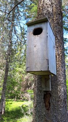 A duck box along Moosehorn Creek
