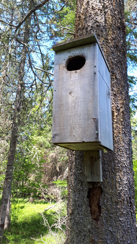 A duck box along Moosehorn Creek