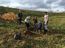 tree planting flood berm sussex 2020 (27