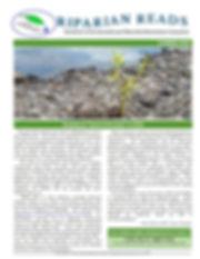 Newsletter Summer 2020.jpg