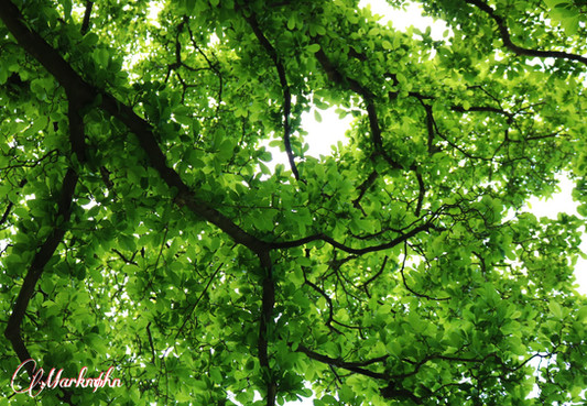 The Branches of Life