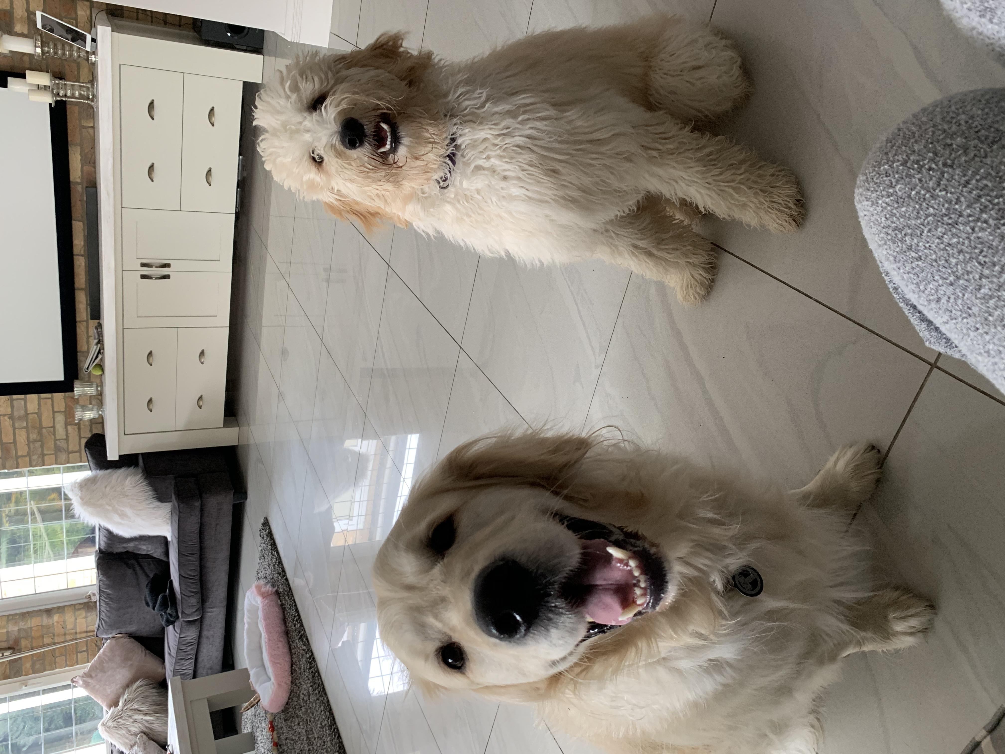 Thor & Lola