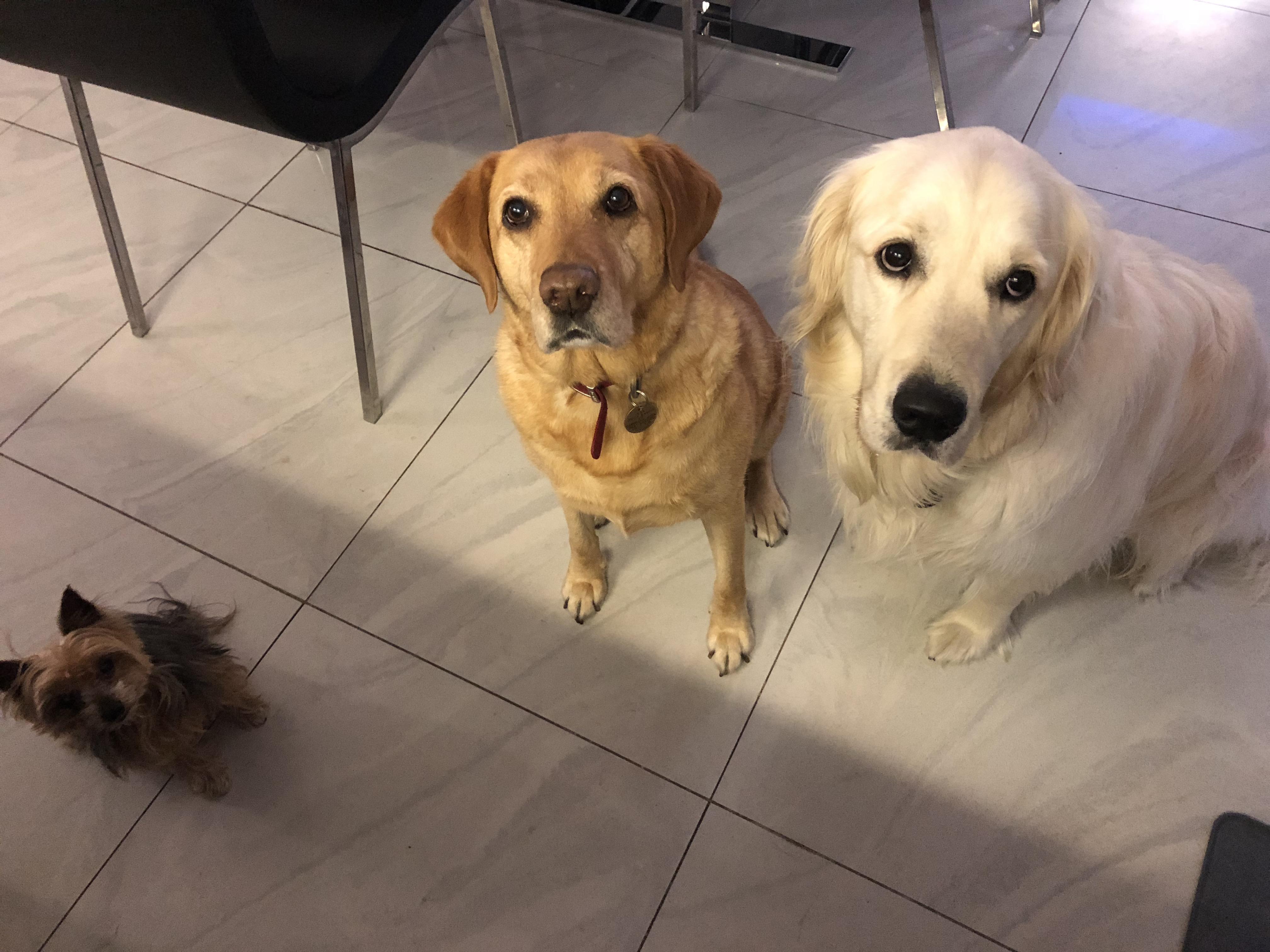 Roxie, Jess & Thor