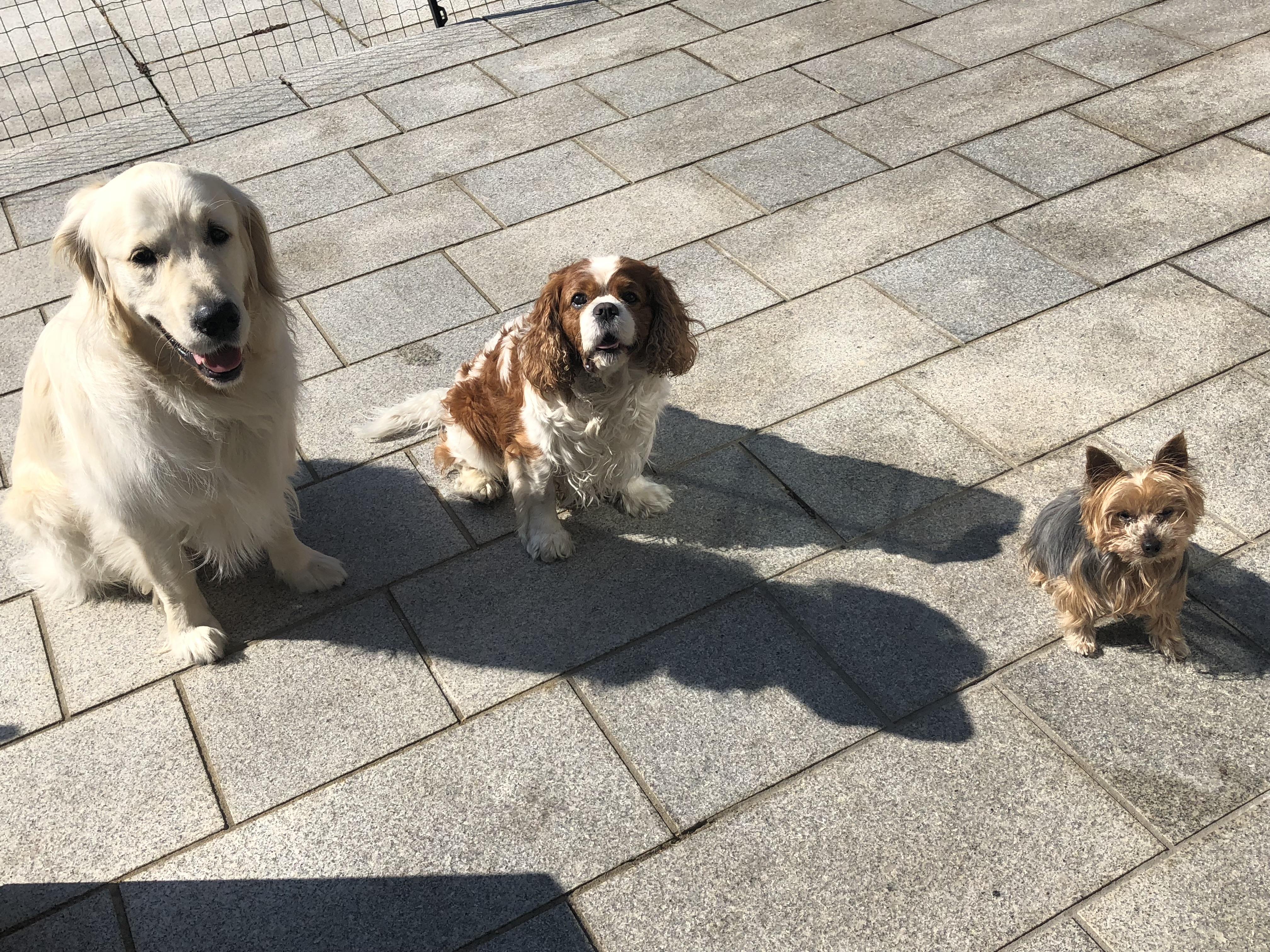 Thor, Bertie & Roxie