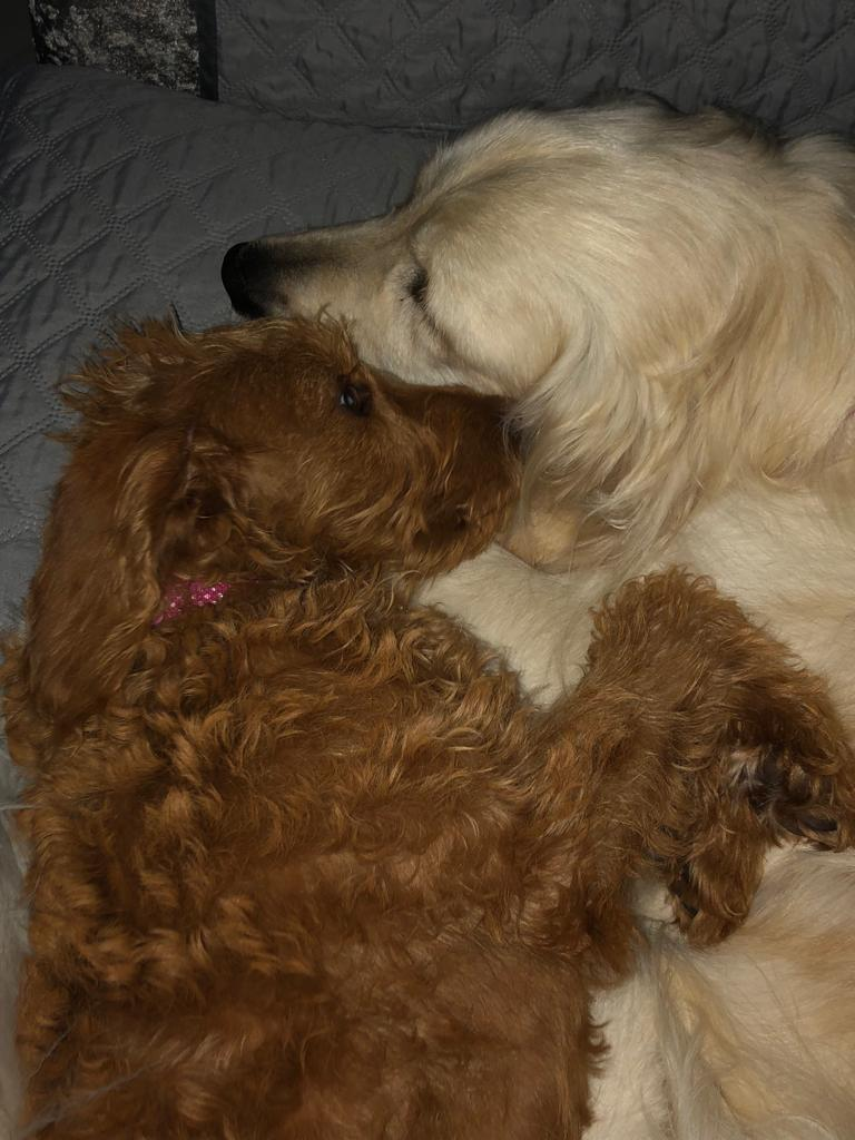 Betsie & Thor