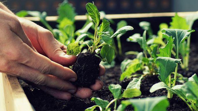 Gardening & Weeding