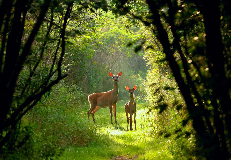 SLIDER-Deer