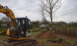 Plantation d'arbre de grande taille à Blegny