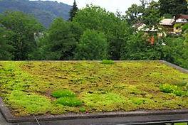 Petites Cours & Grands Jardins à Mortier - toiture végétale à Blegny