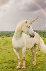 Unicorn%202_edited.jpg