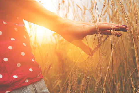 Hand in Wheat - sunlight.jpg