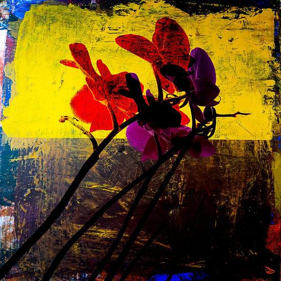ORCHIDS - Morten Saether