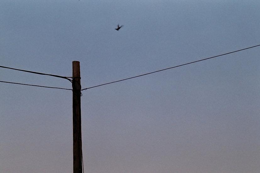 BLUE BIRD 2009 (SPIRITUAL ART COLLECTION) - Ken Kung