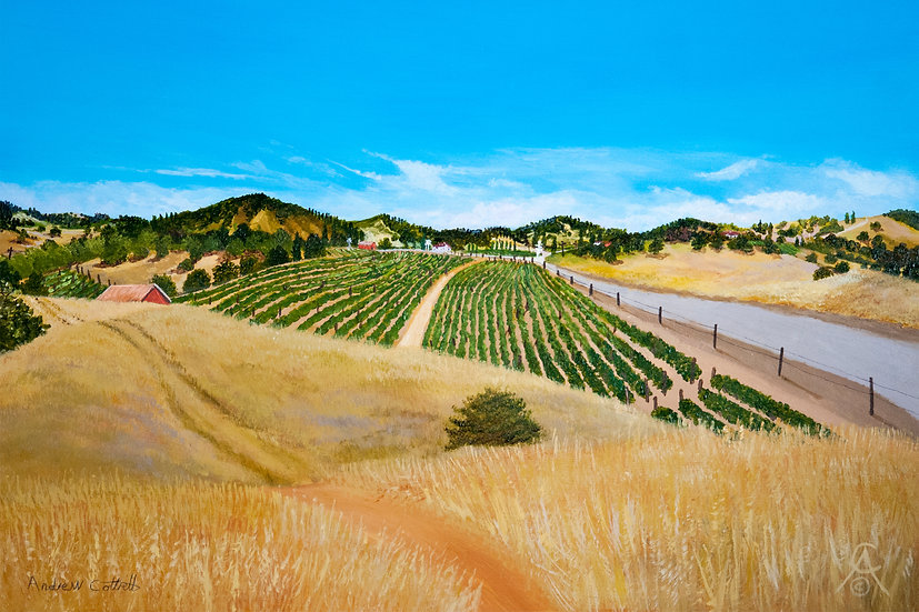 INTO SONOMA COUNTRY- Andrew Cottrell