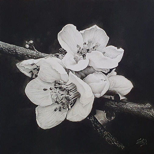 Blooming Blossoms.jpg