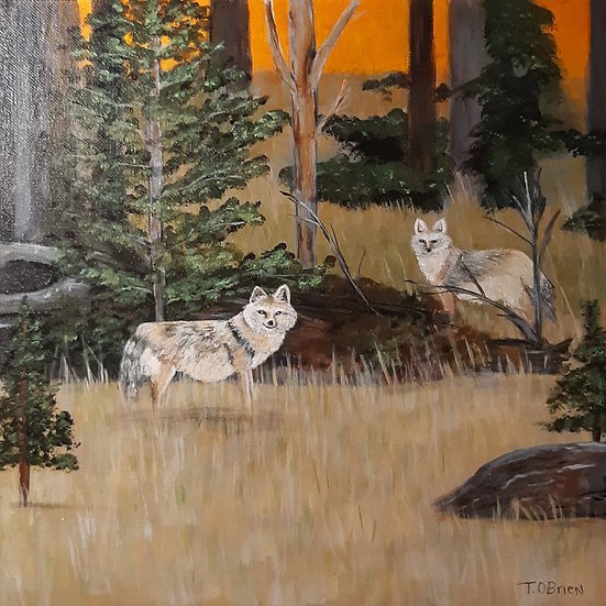 COYOTES AT SUNRISE - Tammy O'Brien