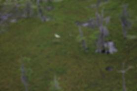 SwampBird (1).jpg
