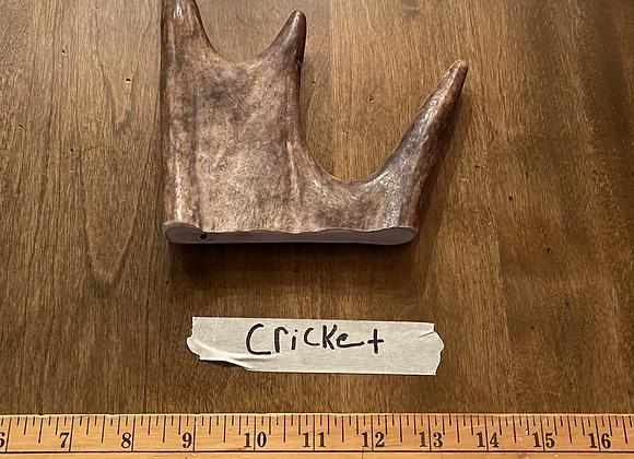Cricket(tender soft top)