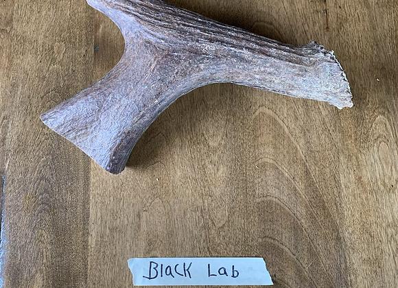Black lab(Aggressive)