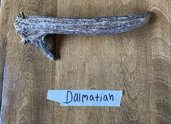 Dalmatian (small Moose antler)