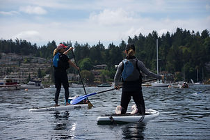 stand up paddleboarding the harbour.jpeg