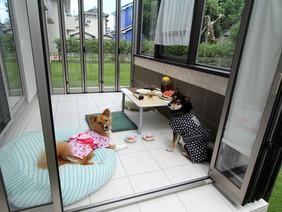 柴犬&ミックス犬のために建てられた「ココマ」の施工例 小田原市 F様邸
