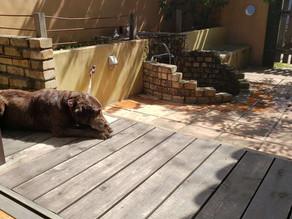 愛犬をシャンプーしてからガーデンルームで日向ぼっこ