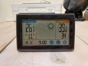 令和3年6月26日(土)のガーデンルーム気温情報です。神奈川県相模原市南区