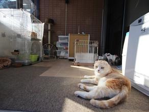 愛猫のためのサンルーム「ココマ」御殿場市 B様邸