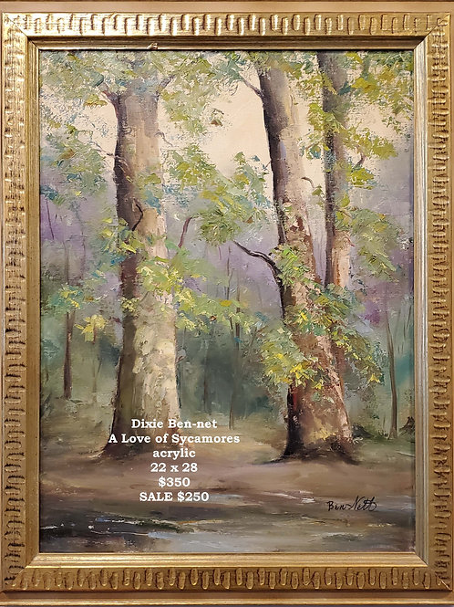 A Love of Sycamores
