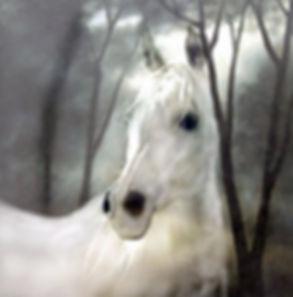 horse-1791995_640.jpg
