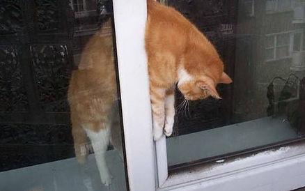 вертикальное проветривание - опасность для кошки