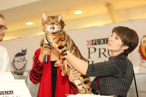 Pro Plan Grand Prix 2017 #proplangrandprix 11-12 ноября. Выставка кошек
