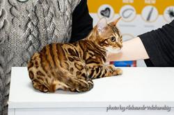 Международная выставка кошек.