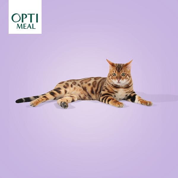 Наш бенгальский котенок в рекламе корма