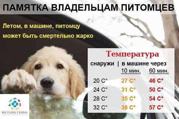 жара в машине - смертельно опасно для питомца