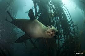 sealsnorker;