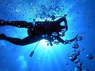 Langebaan Divers