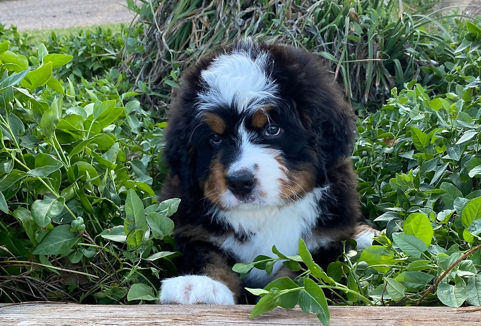 Past Puppy 2