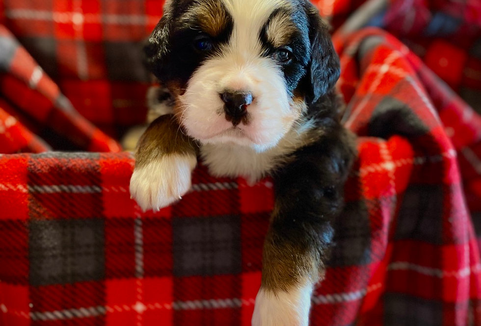 August (Reserved)