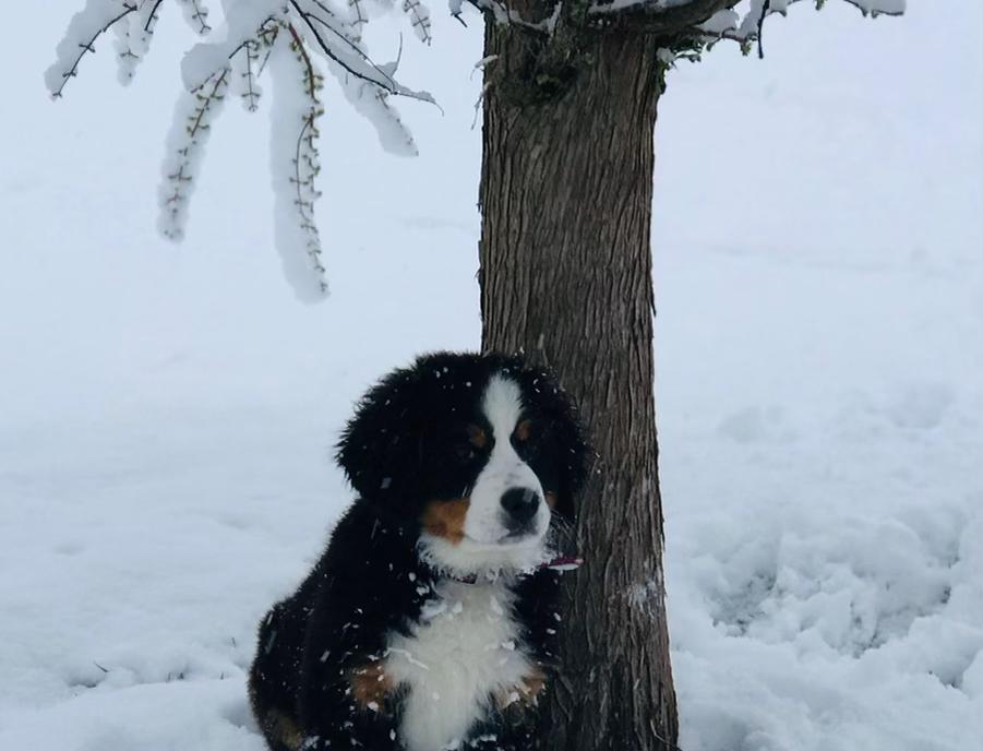 Past Puppy 11