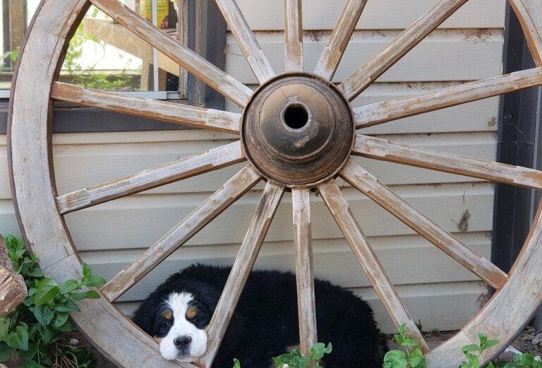 Past Puppy 7