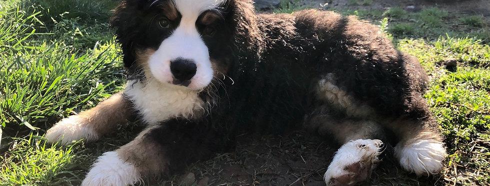Past Puppy 9