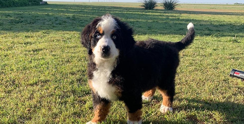 Past Puppy 3
