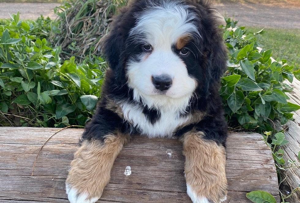 Past Puppy 1
