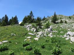 Le paysage du Haut-Jura