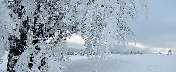 l'arbre en neige 800 .jpg